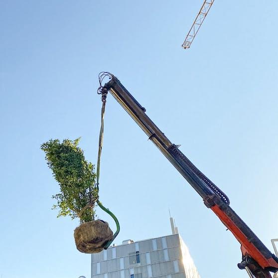 Zur Begrünung von Fassade und Dach des City-Ikea am Westbahnhof werden 160 Bäume und Sträucher mit dem Kran an ihren Platz gebracht.