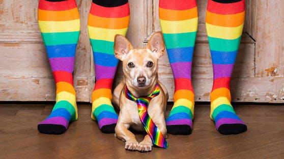 Können Hunde schwul oder lesbisch sein?