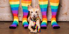 Können Hunde homosexuell sein?