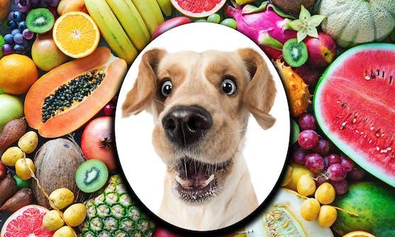 Welches Obst darf mein Hund denn fressen? Wir verraten die die Top 10