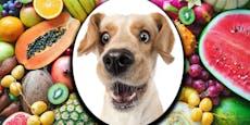 Obst schmeckt auch dem Hund - Hier sind die Top 10
