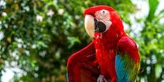 Papagei sechs Monate in Heizkeller gesperrt