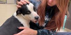 Diesem Hund wurde mitten ins Gesicht geschossen!