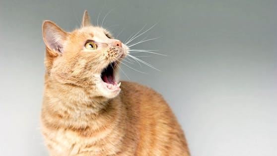 Für manche Katzen können alltägliche Dinge zur großen Gefahr werden.