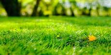 Rasen wächst nicht? Das könnten die Gründe dafür sein