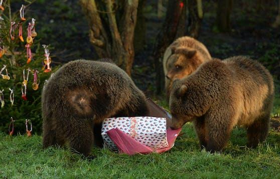 Braunbären im Londoner Whipsnade Zoo. (Archivbild)