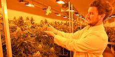 Video aus Wien zeigt, wie Cannabis legal angebaut wird