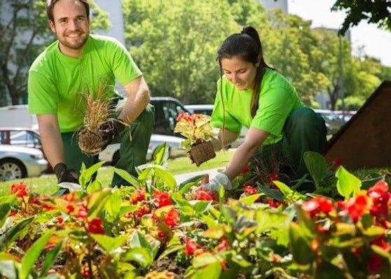 Für sommerlichen Flair pflanzen die Wiener Stadtgärten derzeit 400.000 Sommerblumen in den Farben Gelb, Violett und Weiß in der ganzen Stadt.
