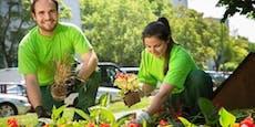 Pflanzerei in Wien! Stadtgärten setzen Tausende Blumen