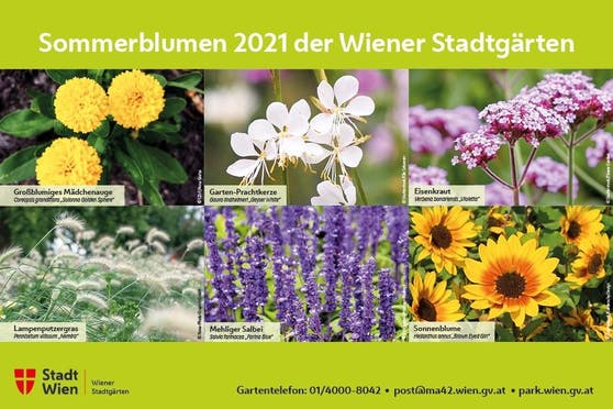 In dieser Saison bühen in den Beeten die Sorten großblumiges Mädchenauge, Sonnenblumen, Garten-Prachtkerze, Lampenputzergras, mehliger Salbei und Eisenkraut.