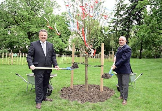Bürgermeister Ludwig pflanzt mit dem Botschafter aus Israel einen Mandelbaum