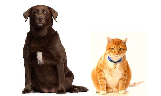 Uff... unsere Haustiere werden immer dicker.