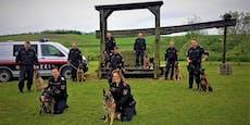 Polizeihunde trafen sich in Wilfersdorf zur Großübung