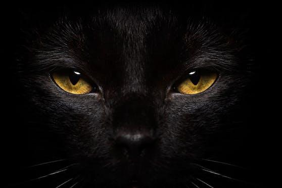 """Schwarze Katzen zählen zu den """"kontroversen"""" Haustieren, aber warum?"""