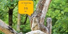 Keine 3G-Regeln im Tierpark Haag, in Schönbrunn schon