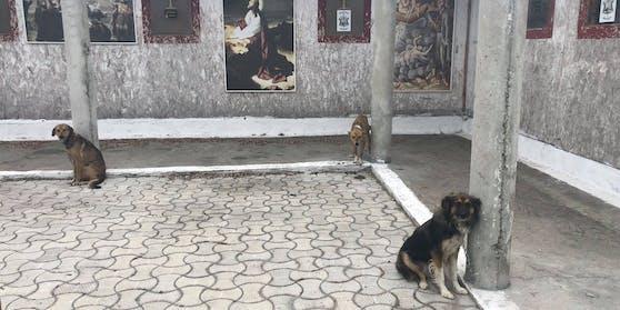 """17 Hunde wurden von einem rumänischen Priester """"gerettet"""" und sind dabei fast verhungert."""