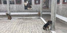Priester ließ 17 Hunde in der Kirche fast verhungern