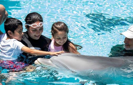 Der Roboter wiegt ungefähr 123 Kilogramm und gleicht einem echten Delfin auf das Haar.
