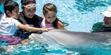Täuschend echt! Ist bald Schluss mit echten Delfinen?