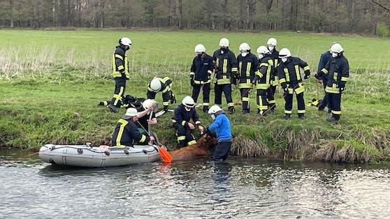 Die Feuerwehr tat alles um die kalbende Kuh aus dem Fluss zu bekommen.