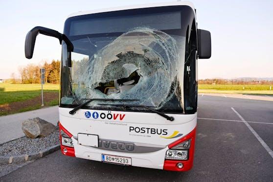Der Bus nachdem Unfall. Auch das Tier hatte es schwer erwischt, es wurde getötet.