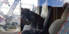 """Bulldoge """"Mimi"""" nach 12 Stunden aus Wohnmobil befreit"""