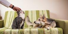 Wie eifersüchtig ist dein Hund wirklich?
