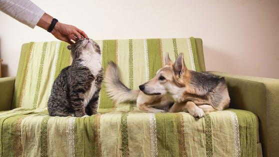 """Empfinden unsere Hunde wirklich Eifersucht, wenn das Frauchen """"fremdstreichelt""""?"""
