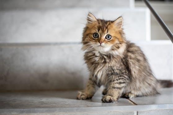 """Drei Jungkatzen wurden bei der Tierkörperverwertung einfach """"entsorgt"""", alle starben."""