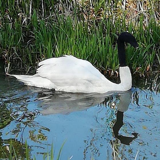 In England sind Vögel geschützt. Sie ohne Genehmigung zu fangen oder zu töten, wird hart bestraft.