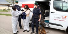 Viel zu junger Hundewelpe illegal nach Wien gebracht