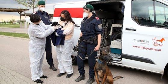 """""""Aktion Scharf gegen illegalen Welpenhandel"""" mit MitarbeiterInnen des TierQuarTier Wien und der Wiener Polizei"""