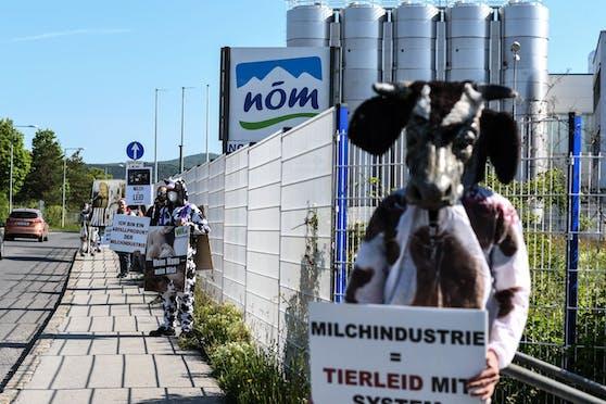 """In Baden vor der NÖM-Zentrale waren heute morgen buchstäblich """"die Kühe los""""."""