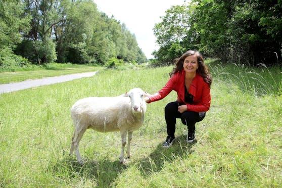 Umweltstadträtin Ulli Sima (SPÖ) besucht die Schafherde auf der Wiener Donauinsel.