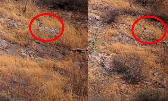 Tatsächlich: Der Leopard schlummert friedlich auf einem Felsen.
