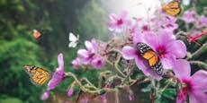 So lockst du Schmetterlinge in den Garten