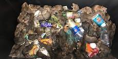 Schock-Foto! Unzählige Ratten in Wiener Müllcontainer