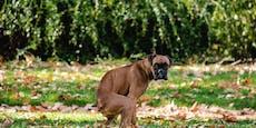 DNA-Tests für Hunde in Baden, um Besitzer zu bestimmen