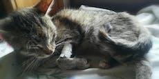 Streunerkatze mit sechs Babys vor Tod gerettet