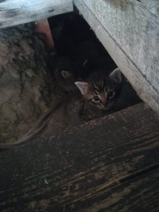 Die kleinen Katzen waren in einer Grube unter Holzbalken versteckt.