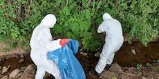 Feuerwehr entfernte giftige Pflanzen in Schutzanzügen