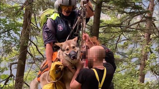 Der Hund konnte nur mit einem Beißkorb gerettet werden.