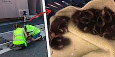 Mit diesem Youtube-Trick wurden Baby-Enten befreit