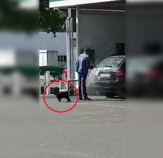 Der Hund passt wohl auf sein Herrchen auf.