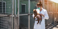 Das gab's noch nie: Nur 1 Hund in einer Woche adoptiert