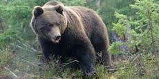 Braunbär zerfleischt Spaziergänger (57) in der Slowakei