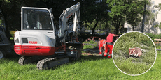 Wiener haben Angst vor Hamster-Massensterben in Park