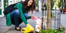 CSI-Aktion soll Hundstrümmerl-Sünderin NÖ entlarven
