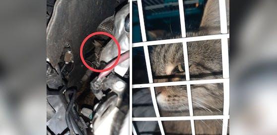Die Katze flüchtete in den Motorraum eines Autos, versteckte sich dort drei Stunden lang.