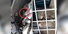 Katze verkroch sich nach Hunde-Attacke in Motorraum